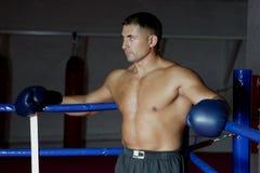 boxare Arkivfoto