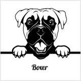 Boxare - kika hundkapplöpning - - avelframsidahuvud som isoleras på vit stock illustrationer