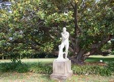 Boxare- och magnoliaträdet Royaltyfri Bild