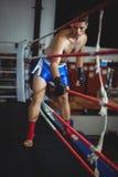 Boxare som skriver in i boxningsring Royaltyfri Foto
