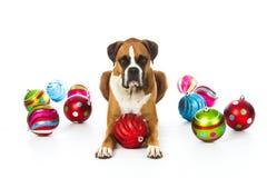 Boxarehund med julprydnadar Royaltyfri Fotografi