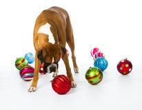 Boxarehund med julprydnadar Arkivbilder