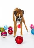 Boxarehund med julprydnadar Royaltyfri Foto