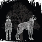 boxarehundar två Arkivfoto