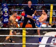 boxas kick Arkivbild