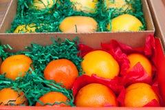 Boxas med citrusfrukter - apelsiner, grapefrukter och tangerins Fotografering för Bildbyråer