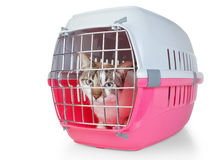 Boxas med en kattbur för transport. Arkivfoton