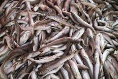 Boxas ny fisk i en grekisk marknad Royaltyfria Foton