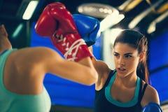 Boxe de treino de duas fêmeas Foto de Stock