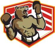 Boxe fâchée de boxeur d'ours rétro Image libre de droits