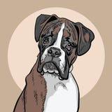 Boxeador del perro Ilustración ilustración del vector
