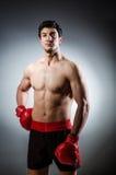 Boxeador muscular foto de archivo