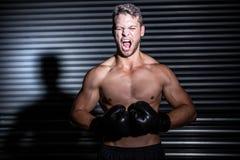 Boxeador muscular que grita Fotografía de archivo