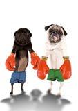Boxeadores del barro amasado Imagenes de archivo
