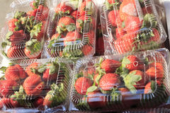 Boxed strawberries Stock Images