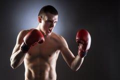 boxeo Combatiente muscular imagen de archivo libre de regalías