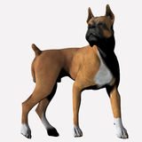 Boxer - 04. Boxer in motion. Turning to look Vector Illustration