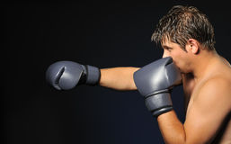 The boxer Stock Photography