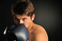 The boxer Royalty Free Stock Photography