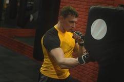 boxer immagine stock