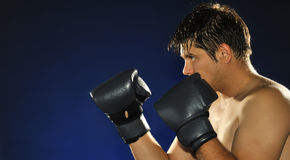 The boxer Royalty Free Stock Images