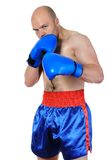 Boxer. Portrait of an experienced boxer in gloves. Isolated on white background Stock Image