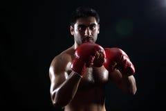 Boxer stockbild