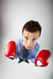 Boxer Royalty Free Stock Photos