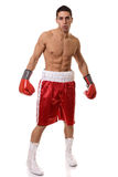 Boxer Royalty Free Stock Images