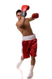 Boxer Stock Photo