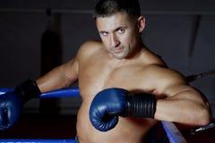 Boxer Royalty Free Stock Photos