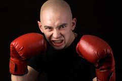 Boxer. royalty free stock photos