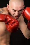 Boxer. Stock Photo