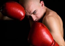 Boxer. Royalty Free Stock Images