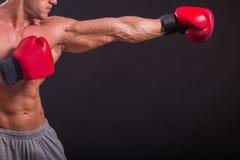 boxer Imagens de Stock Royalty Free