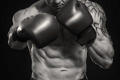 boxer immagine stock libera da diritti