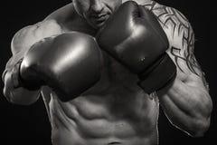 boxer immagini stock