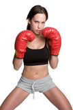 Boxer Royalty Free Stock Photography