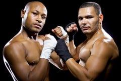 Boxer-Aufstellung stockfotos