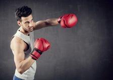 Boxer Background Stock Photos