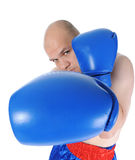 Boxer in blue gloves. Experienced boxer in blue gloves. Isolated on white background stock images