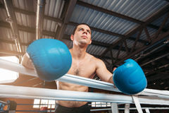 Boxer in blue gloves holds on the ropes. royalty free stock images