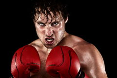 Boxer Boxing. Staring angry, mean and sweat showing strength. Young man looking aggressive with boxing gloves. Caucasian male model isolated on black background stock images