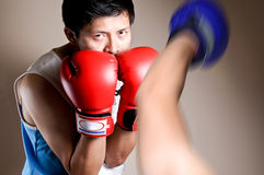 Boxer on boxing Royalty Free Stock Photography