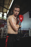 Boxer with boxing gloves Stock Photo