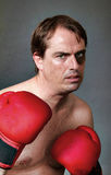 Boxer in boxing guard position Royalty Free Stock Images