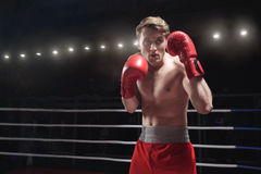 Boxer in boxing ring. Young boxer with gloves in boxing ring Stock Image
