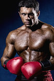 Boxer Boxing staring showing strength. Royalty Free Stock Photos