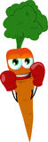 Boxer carrot Stock Photos