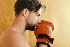 Boxer with concentrated face trains. Man with messy hair on orange texture background. Guy with naked shoulders wears. Red leather boxing gloves. Sports, box stock image